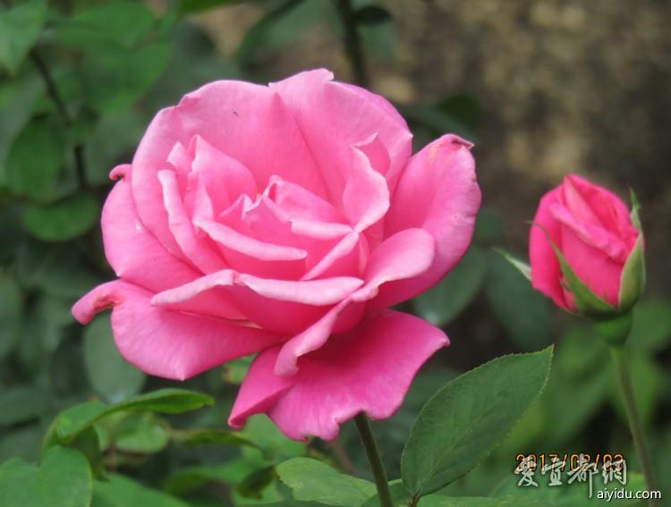 IMG_6961_副本.jpg