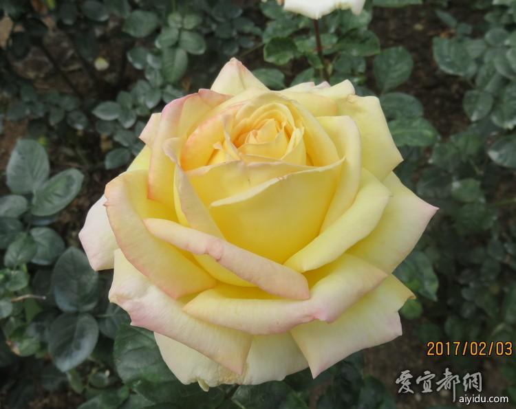 IMG_7011_副本.jpg