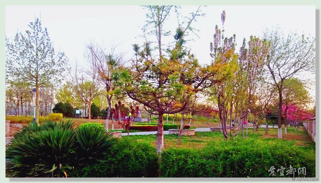小区公园随拍 (1).jpg