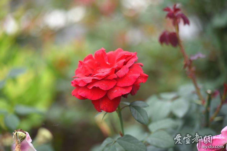 DSC_7867_副本.jpg