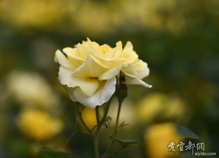 DSC_7872_副本.jpg