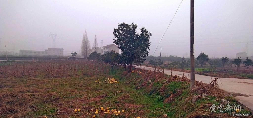 故乡的冬天  2.jpg