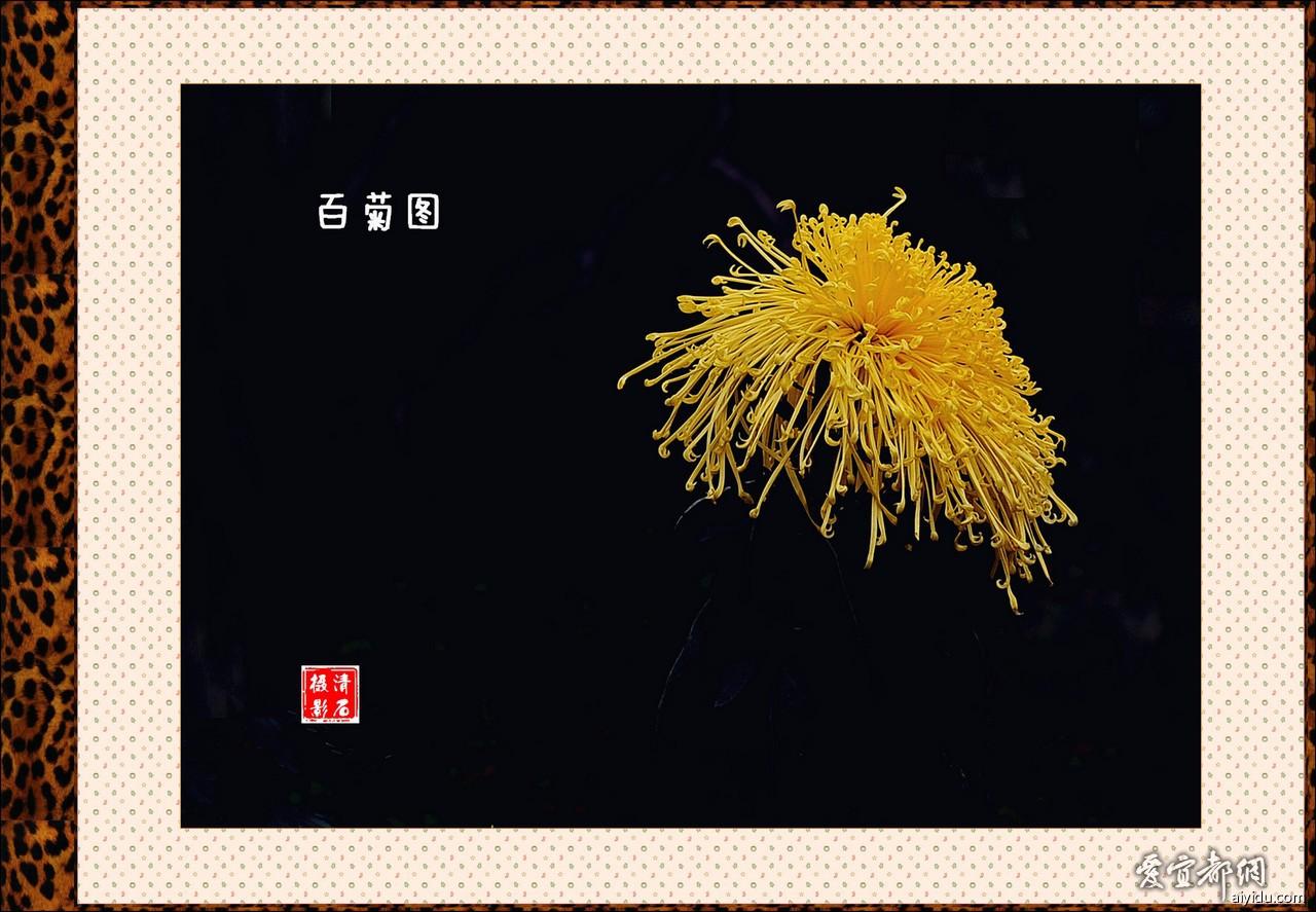DSC_7606_11_1_b.jpg