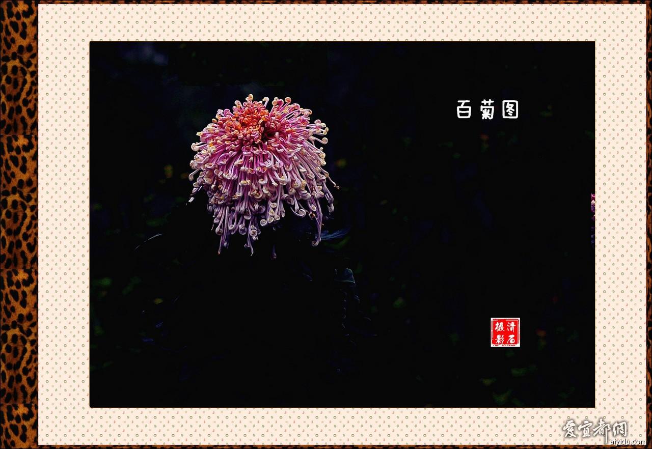 DSC_7612_1_1_1_a.jpg