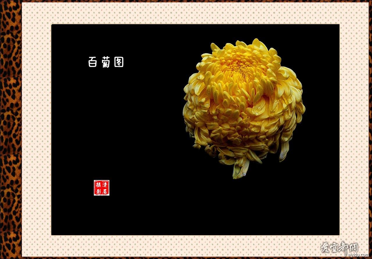 DSC_7649_1__1_b.jpg