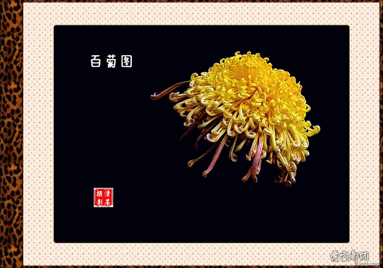 DSC_7658_1_1_1_1_b.jpg