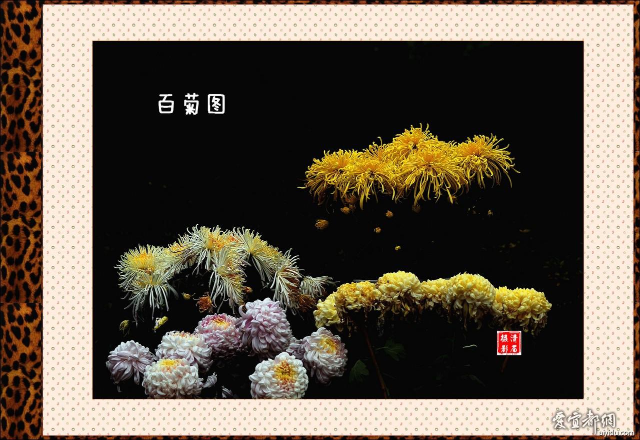 DSC_7661_1_1 _1_1.jpg