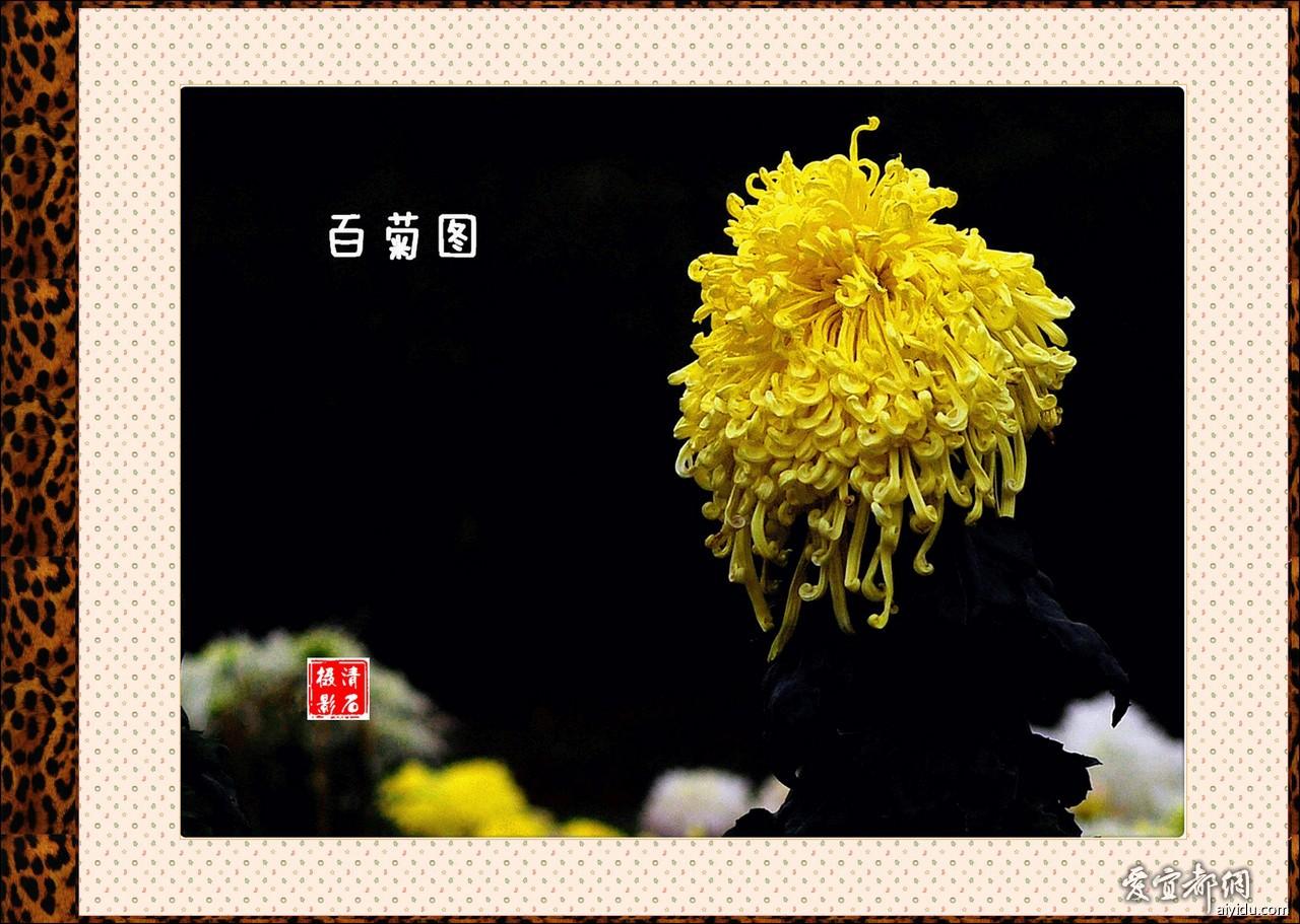 DSC_7678_11_1_1_a.jpg