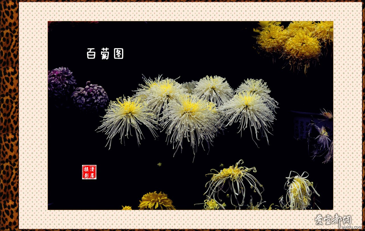 DSC_7700_1 _1_1_1.jpg