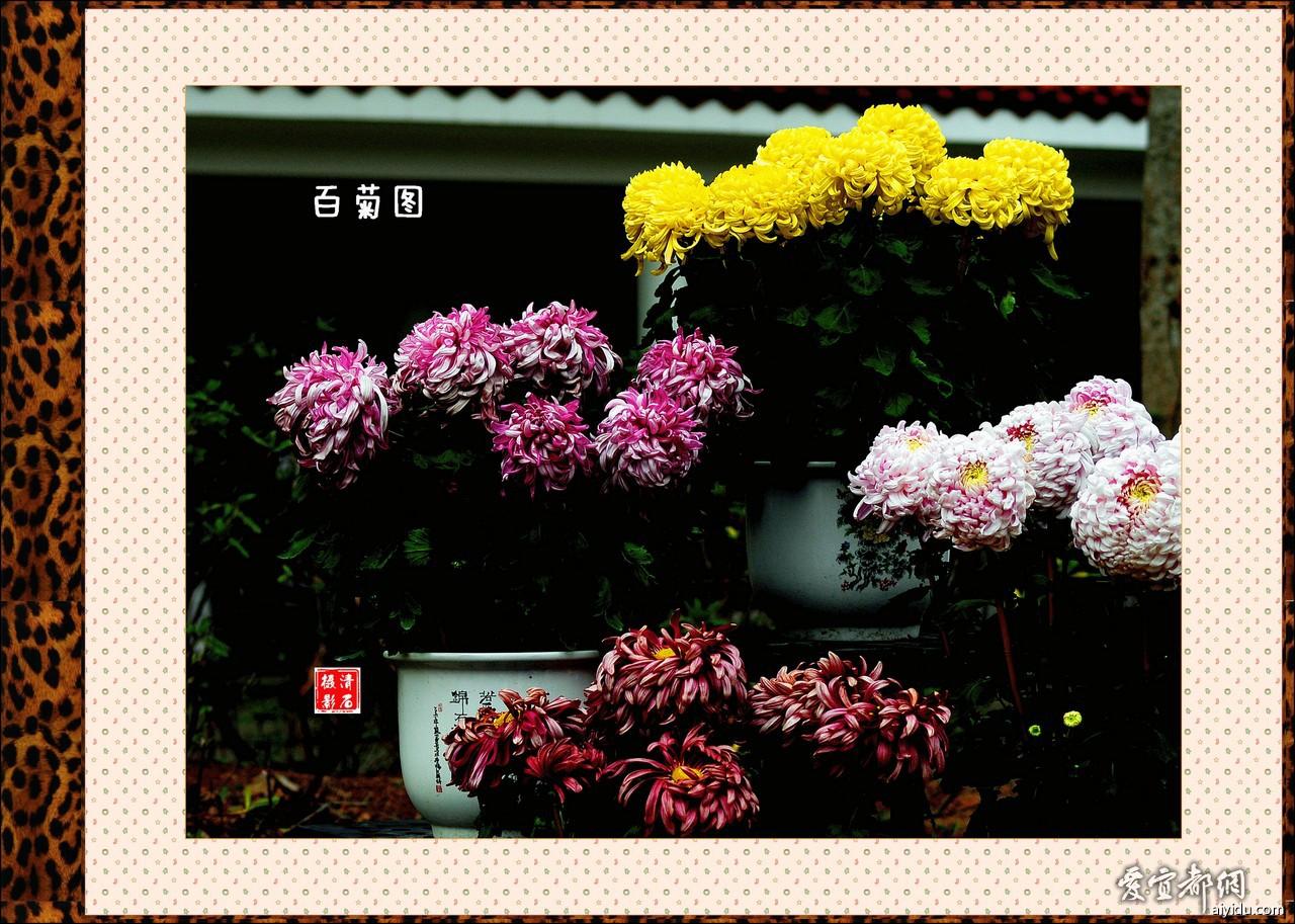 DSC_7704_1_1_1_1.jpg