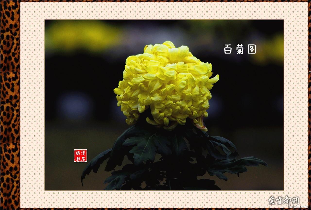DSC_7714_1_1_1_1.jpg
