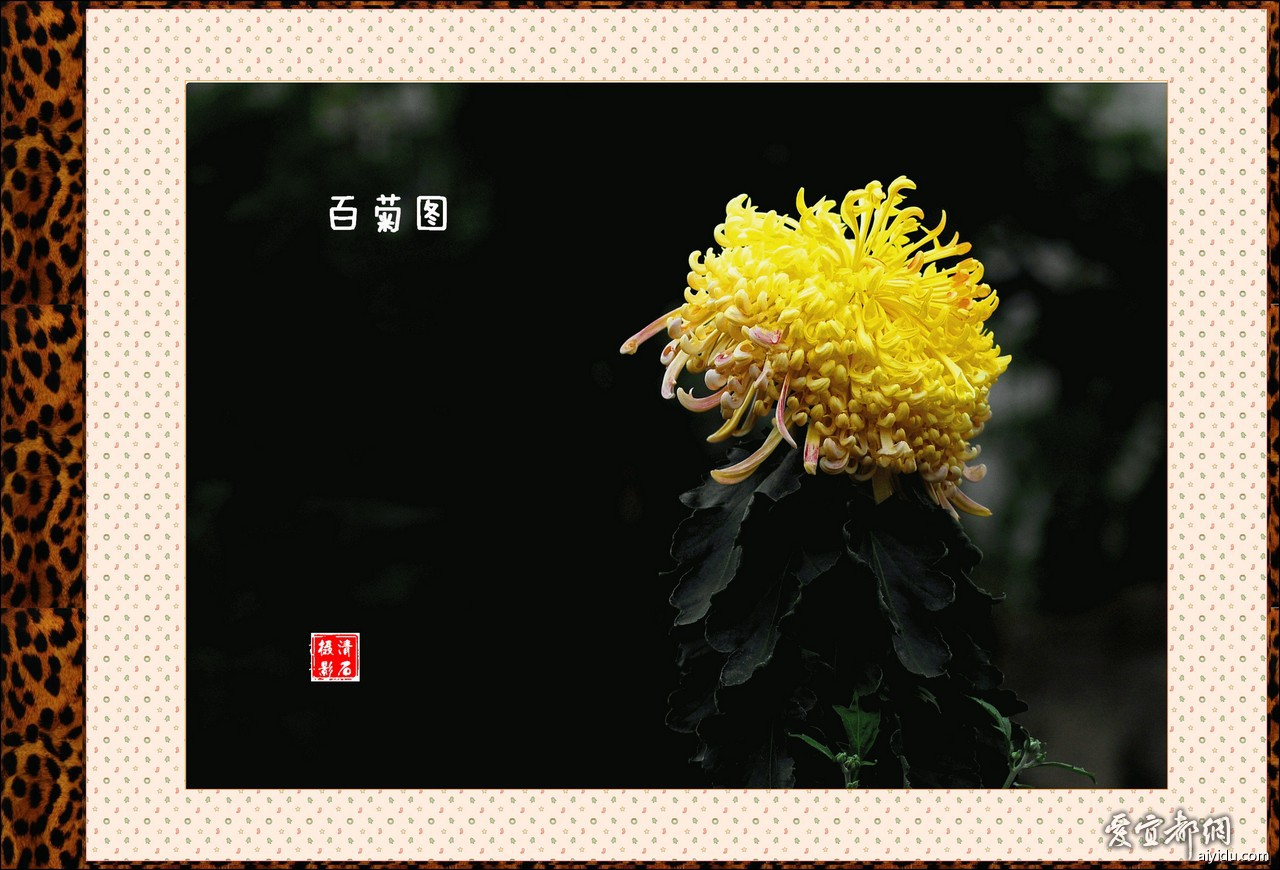 DSC_7719_1_1_1_1.jpg