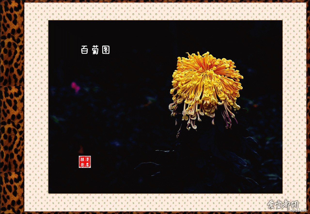 DSC_7738_1_1_1_1.jpg