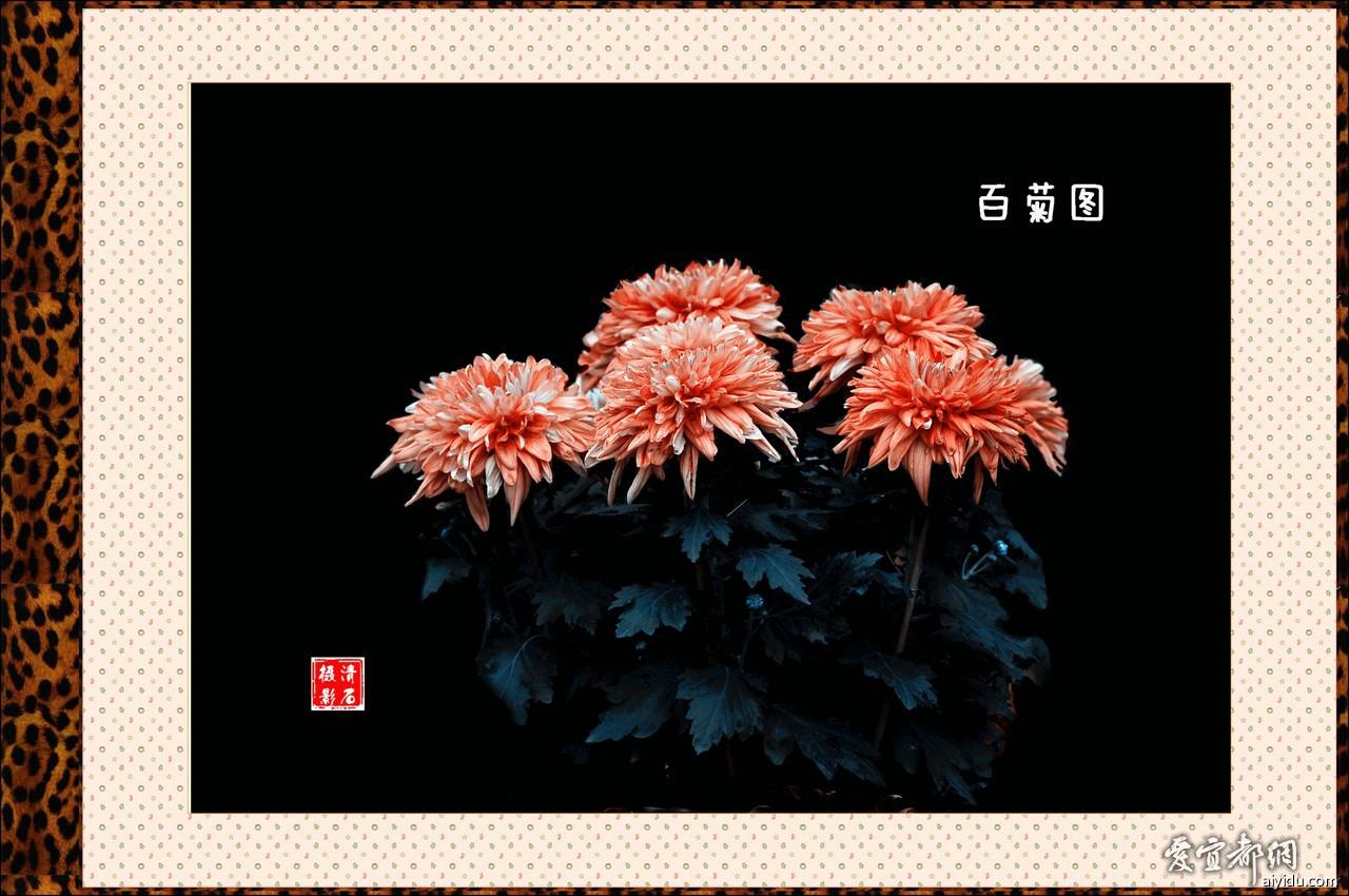 DSC_7746_1_1_1_1.jpg
