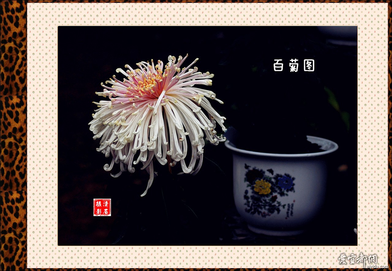 DSC_7749_1_1_1_1.jpg