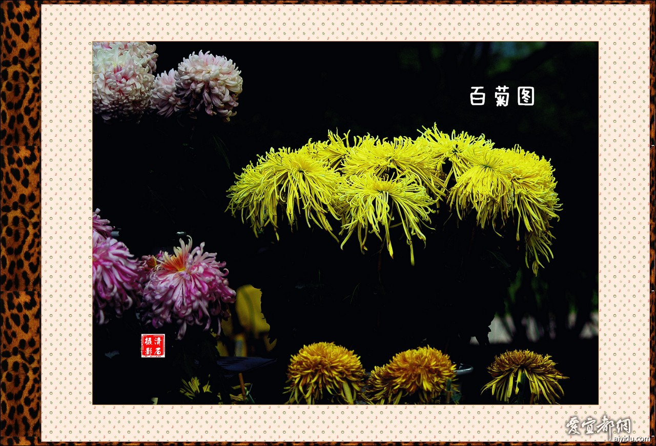 DSC_7770_1_1_1_1.jpg