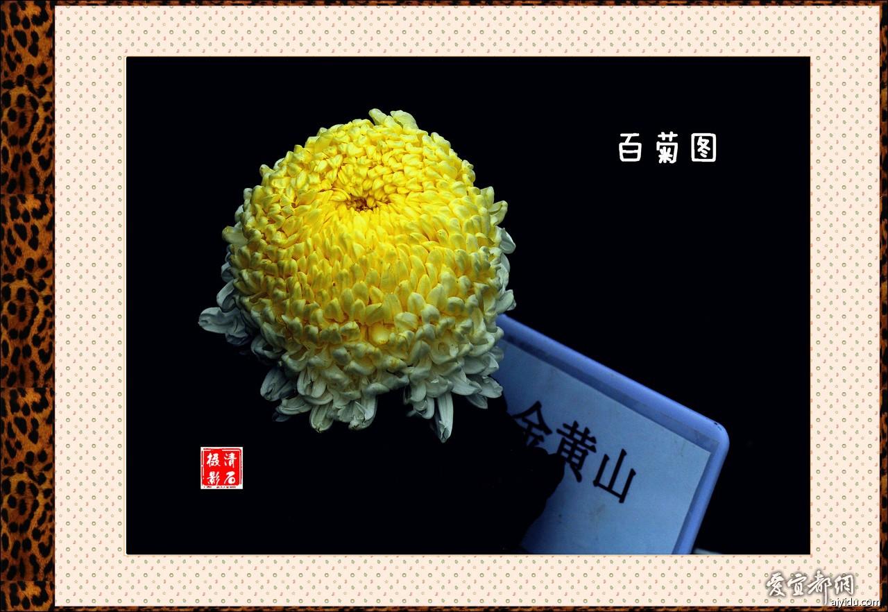 DSC_7794_2_1_1_1_1.jpg