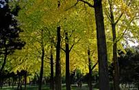 深秋靓丽的黄色