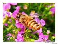 小米手机拍蜜蜂