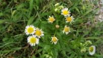 卓凡 手机拍的花花草草。