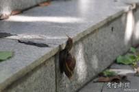 蜗牛爬台阶