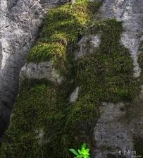 岩石上顽强的植物