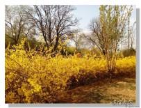 宜都人拍北京40——居民小区公园的春天