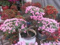 美丽的鲜花   献给可爱的故乡