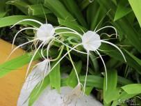 泰国椰树与花卉随拍