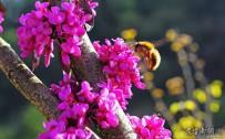 小小蜜蜂采花蜜