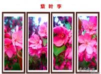 手机微距拍摄  紫叶李