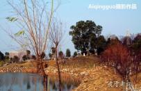 文峰公园的枫树【原创摄影】