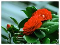 绿丛又放数枝红