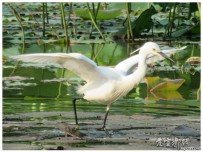 白鹭是一首精巧的诗