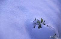 瑞雪兆丰年,祝你步步高