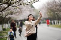 文峰公園的櫻花開了!