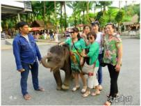 泰国印象之十五(小象挣钱)