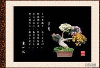 菊花盆景与咏菊美诗