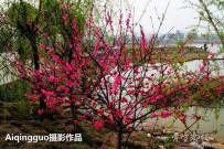 宜都之春。。。桃红柳绿的文峰公园