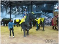 泰国印象之十七(东芭乐园.大象表演)