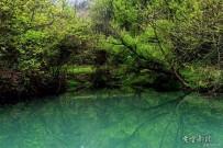 王畈樟桂岭风景