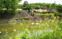 双井寺村百年老屋需保护