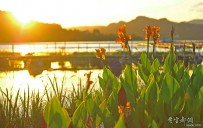 夕阳辉映水上花
