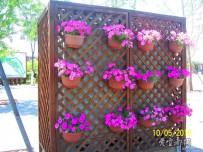 宜都人拍北京43——北京园博园之四  盆景花卉