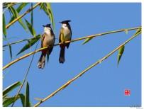 樹上的鳥兒成雙對