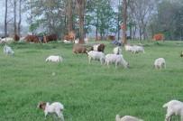 宜都洋溪关州岛生态养殖基地  看起来似大草原
