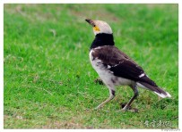 中山公园的鸟(一)