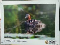 洪湖公園鳥類攝影展隨拍