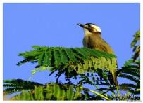 中山公园的鸟(二)