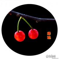 梁山路上的野樱桃